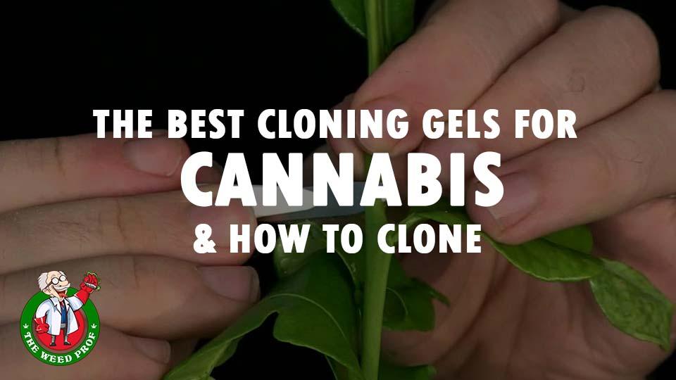 cannabis-cloning-gels