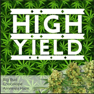 High-Yield-Strains